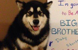 big-brother-dog