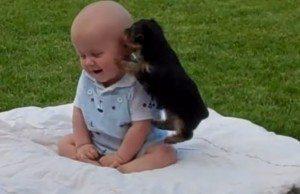 Puppy vs. Baby